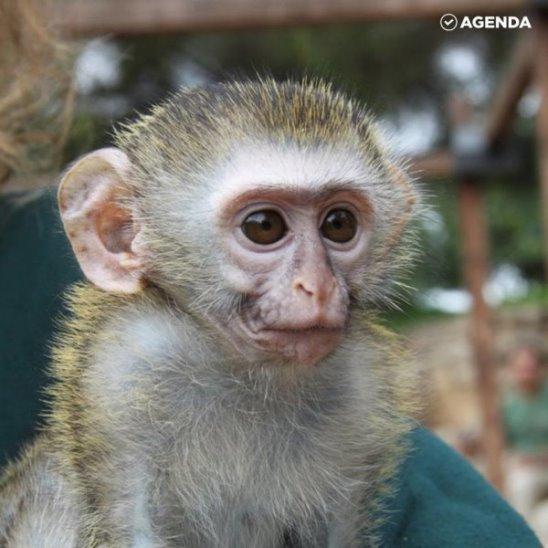 Умилительные обезьянки