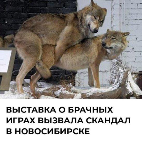 Выставка о брачных играх животных вызвала скандал в Новосибирске
