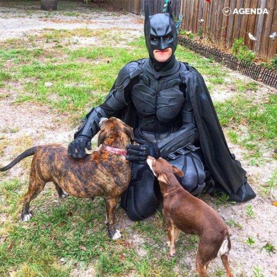 Бэтмен помогает бездомным животным