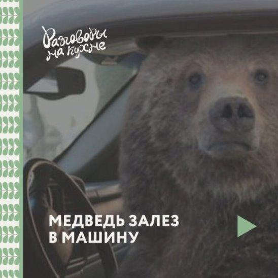 Медведь залез в машину