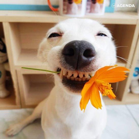 Собака-улыбака из Таиланда покоряет всех!