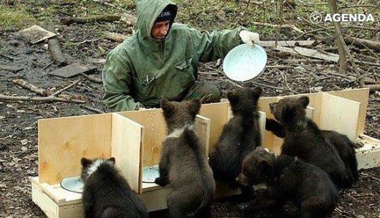Приют для медвежат-сирот