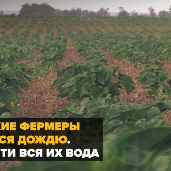 Крымские фермеры радуются дождю