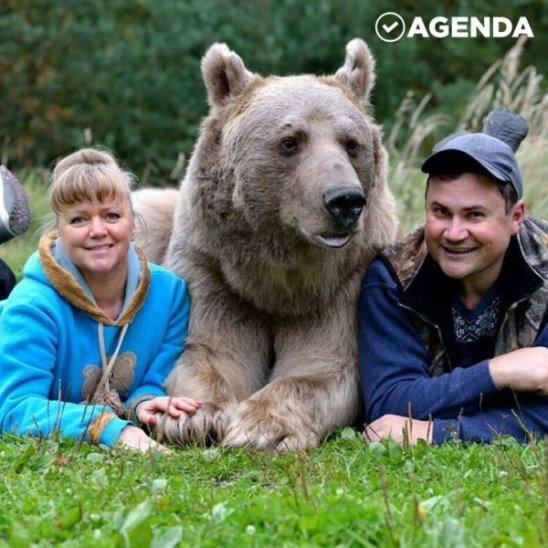 Медведь-семьянин