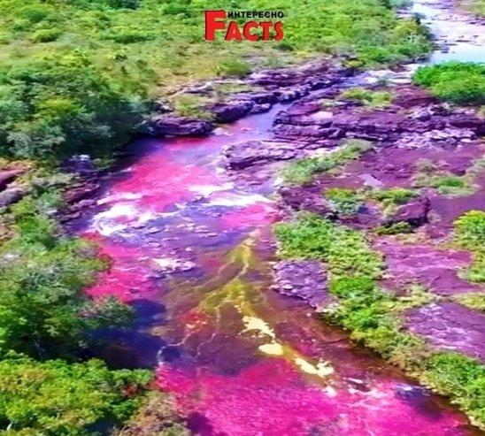 Радужная река в Колумбии.