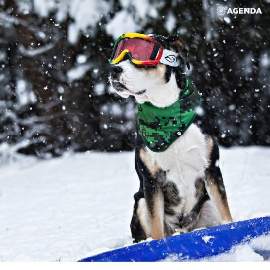 Пёсики на лыжах