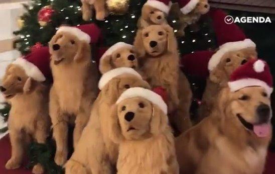 Квест — найди живую собаку