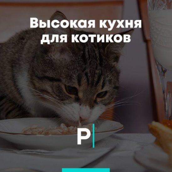 Высокая кухня для котиков