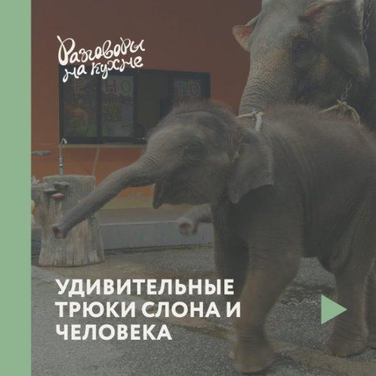 Удивительные трюки слона и человека
