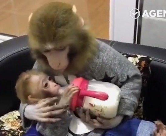 Мама обезьянка