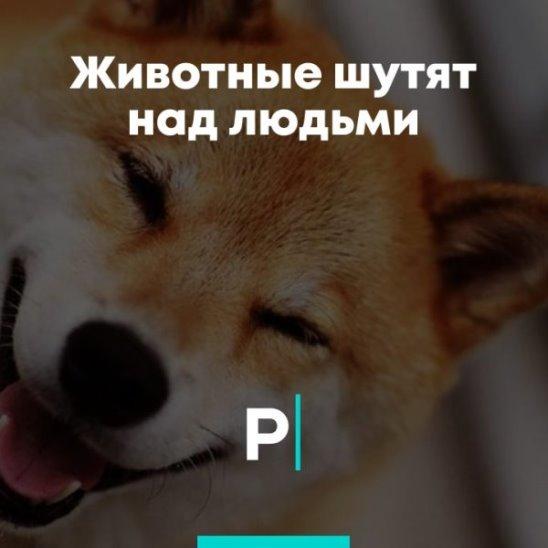 Животные шутят над людьми