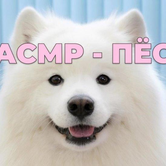 АСМР — пёс