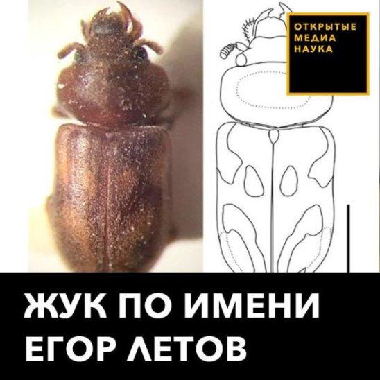 Жук Егор Летов