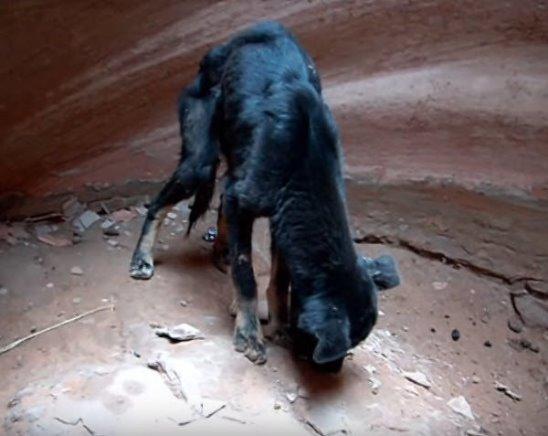 Турист услышал, как скулит собака в одном из каньонов в пустыне Аризоны. Он решил спуститься вниз.