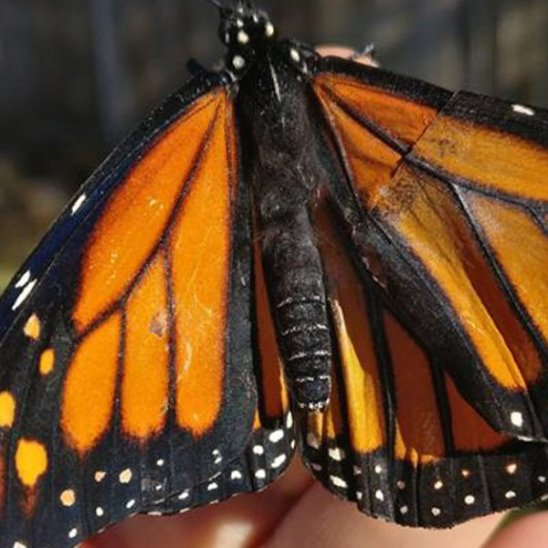 Девушка спасает бабочек
