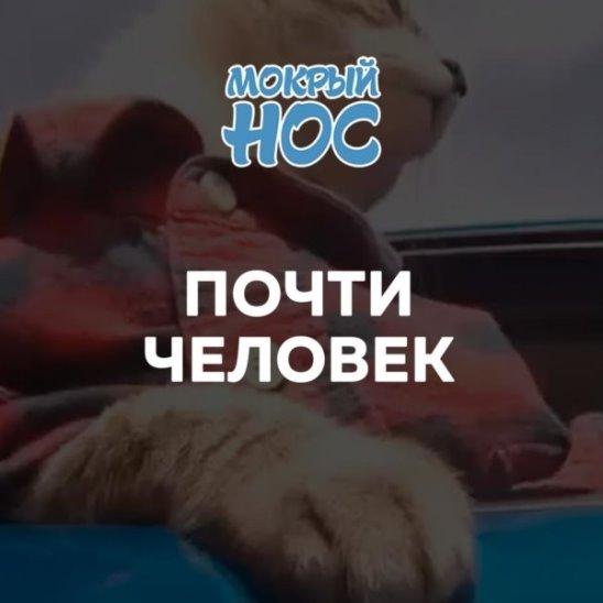 """""""Человечные"""" питомцы"""