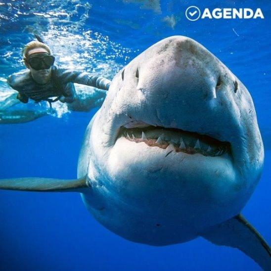 Купание в компании акулы