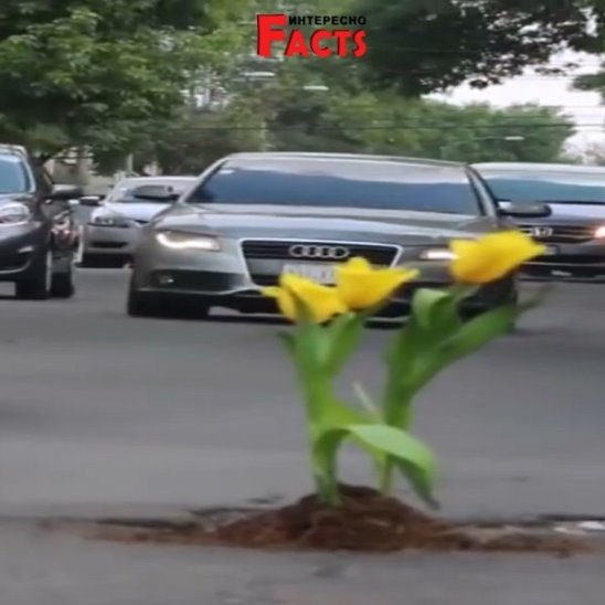 Чтобы бороться с ямами на дорогах, люди сажают в них цветы.