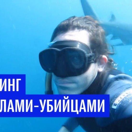 Дайвинг с акулами-убийцами