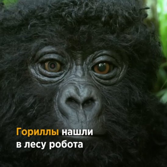 Робот-детёныш гориллы