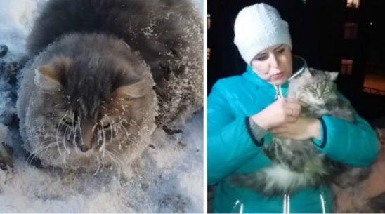 Продолжение видео про кота, вмёрзшего в лёд. Котик жив, здоров и счастлив