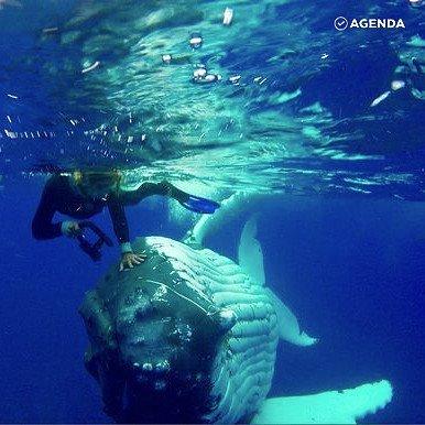 Кит спас женщину от акулы