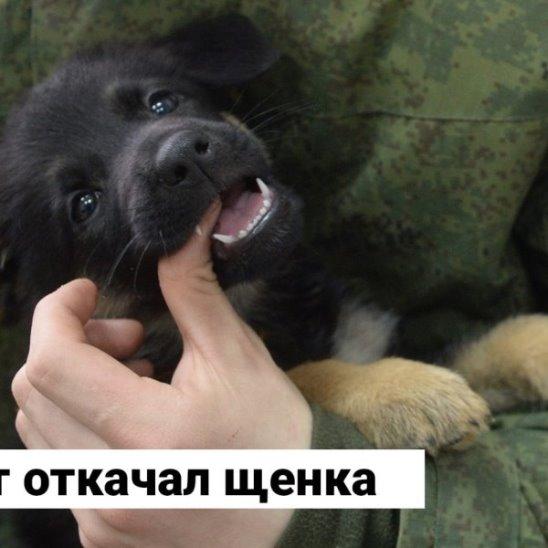 Солдат спас щенка
