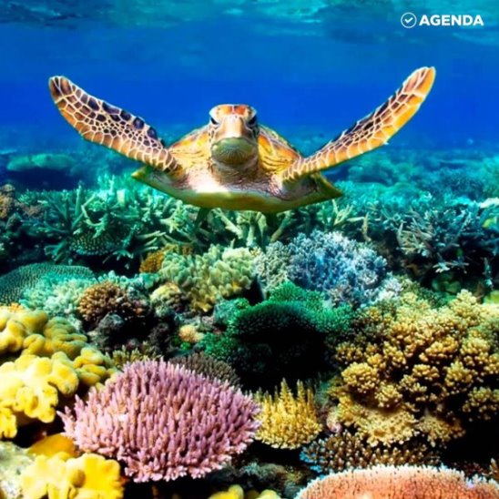 Большой Барьерный риф в опасности