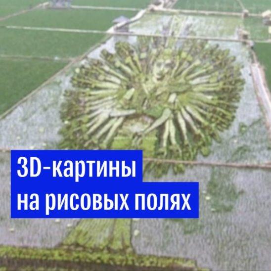 Картины на рисовых полях в Китае