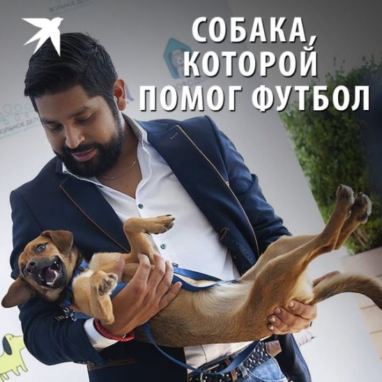Собака, которой помог футбол