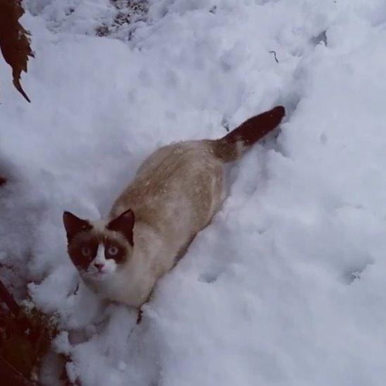 Кот радуется первому снегу ))) Видео: Алина Ильченко