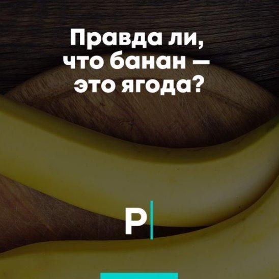 Правда ли, что банан — это ягода?
