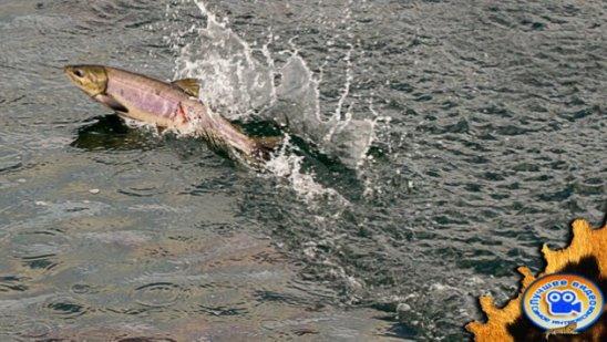 Как надо ловить рыбу Сахалин