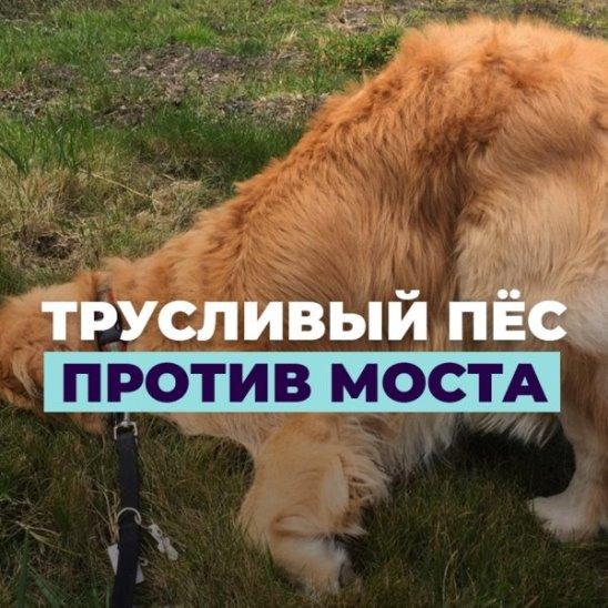Трусливый пёс против моста
