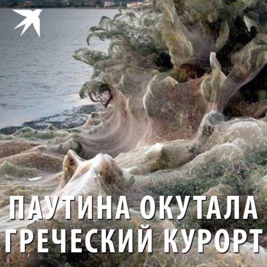 Гигантская паутина окутала греческий курорт