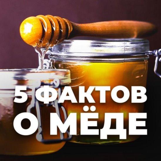 5 фактов о мёде