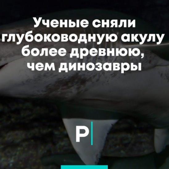 Ученые сняли глубоководную акулу более древнюю, чем динозавры