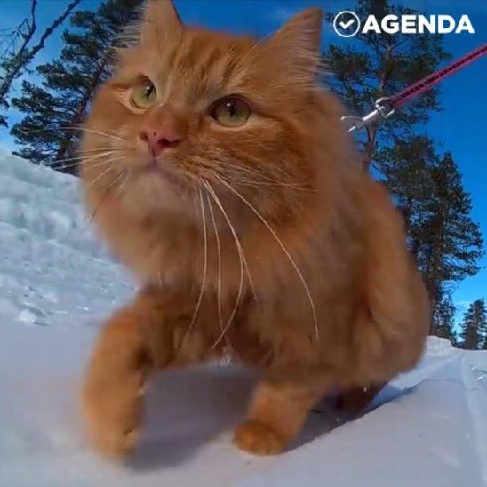 Самый спортивный кот на свете