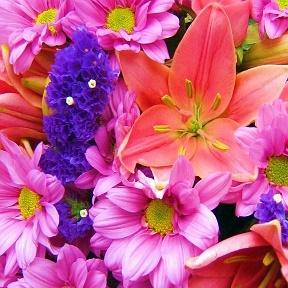 самые красивые цветы мира фото