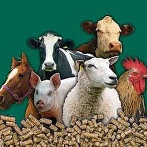 Ветеринария и зоотехния ru Ветеринария и зоотехния