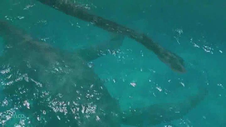 deniz canavarı izle