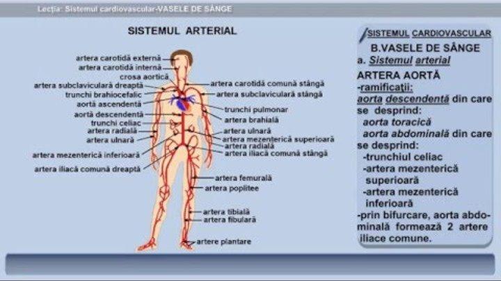 varicoză internă