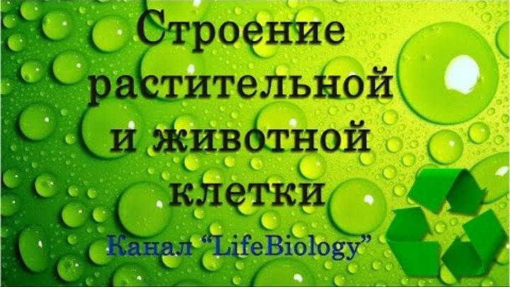 Обложка видеозаписи Строение растительной и животной клетки