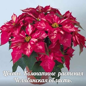 цветы картинка комнатные