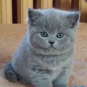 котики милые котики фото