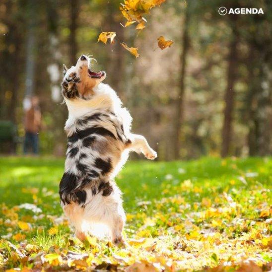 Домашние питомцы обожают осень