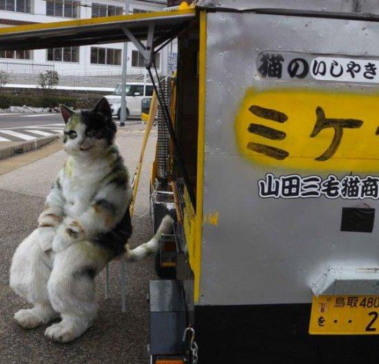 Этот добрый продавец переодевается в кота, чтобы порадовать своих покупателей