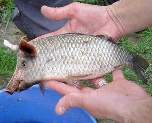Однажды на рыбалке