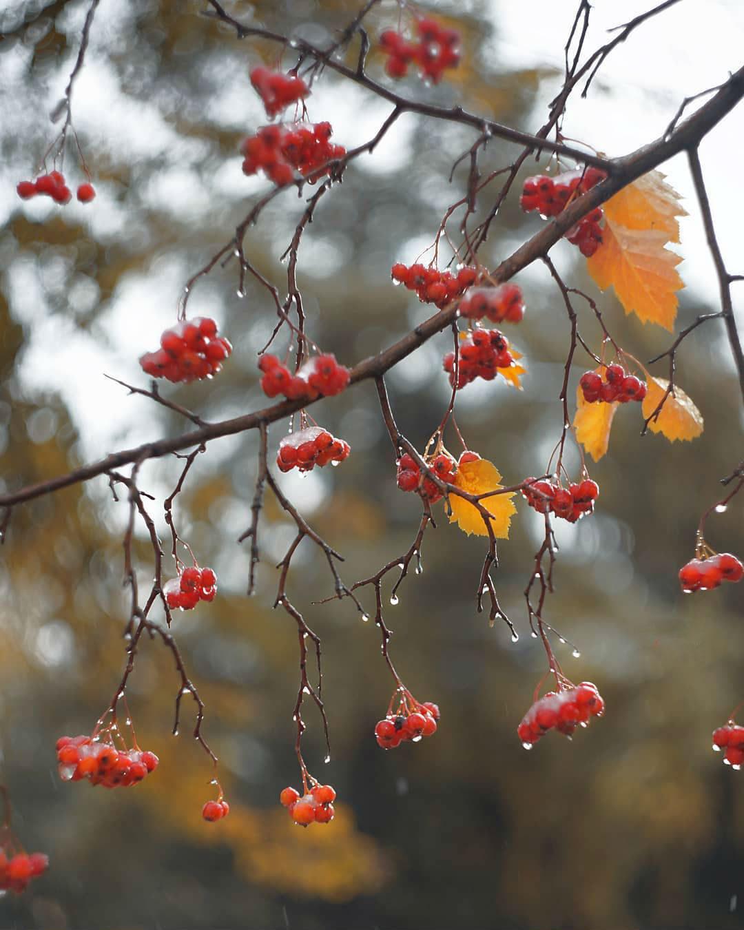 открытки, красивые картинки ноябрь виду
