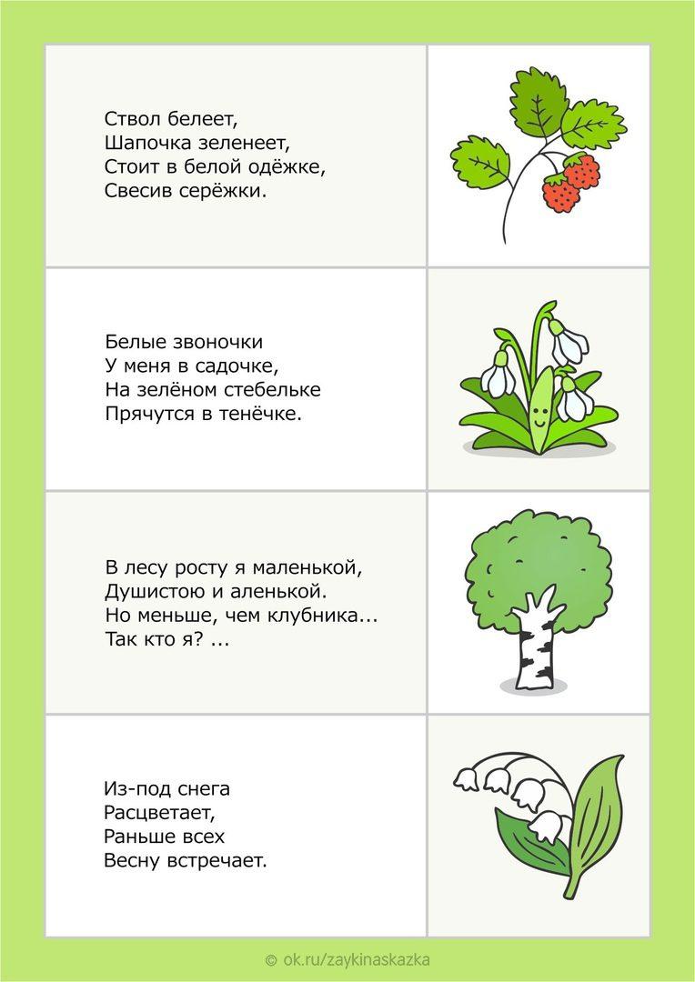 Загадки о растениях с картинками которые можно распечатать